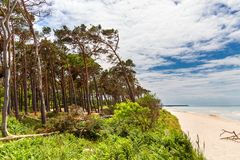 Plażowy przegapiający morze z drzewem i niebieskim niebem obraz stock