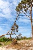 Plażowy przegapiający morze z drzewem i niebieskim niebem obrazy royalty free