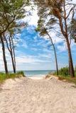 Plażowy przegapiający morze z drzewem i niebieskim niebem fotografia royalty free