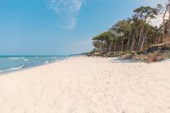 Plażowy przegapiający morze z lasem zdjęcie stock