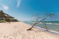 Plażowy przegapiający morze z lasem zdjęcia stock
