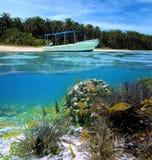 plażowy rybi tropikalny zdjęcia royalty free
