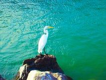 Plażowy Santa Catarina zdjęcia stock