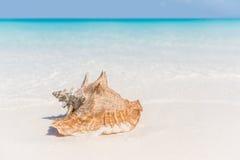 Plażowy skorupa oceanu konchy copyspace tło Obrazy Stock