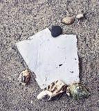 Plażowy tło z białym papierem, denni shels Zdjęcie Royalty Free