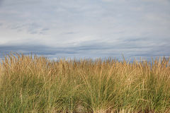 Plażowy trawy tło Obraz Stock