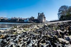 Plażowy widok historyczny grodowy Caernafon, Gwynedd w Walia, Zjednoczone Królestwo - obraz stock