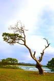 plażowy wietrzny obrazy royalty free