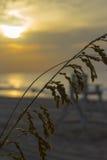 plażowy wschód słońca Zdjęcie Royalty Free