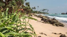 Plażowy zwrotnik Sri Lanka Piękny Brzegowy Timelapse 4k zdjęcie wideo