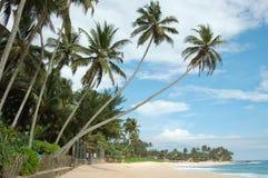 plażowych pięknych palm tropikalny biel Zdjęcie Royalty Free