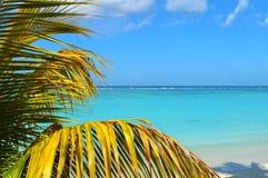 Plażowych Tropikalnych raj palm Urlopowy morze Obrazy Stock