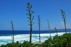 Plaży i agawy rośliny Fotografia Royalty Free