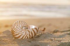 plaży promieni łodzika skorupy słońce Obrazy Stock