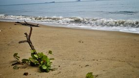 plaży w kąpieliskach resztę dnia słońce Thailand Zdjęcia Royalty Free