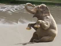 plaża baraszkuje Zdjęcia Royalty Free