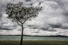Plaża chmurnieje z drzewem zdjęcie stock