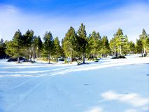 Pla de Bassies. Snow has reached the subalpine meadows Royalty Free Stock Photography