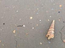 Plaża i denna skorupa Zdjęcie Stock