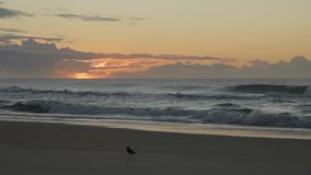 Plaża i ptak zdjęcie wideo