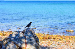 Plaża i ptaki Obraz Royalty Free
