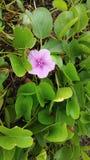 Plaża kwiaty Obraz Stock