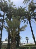 Plaża, lato, jachty, zabawa i dywersja, Obraz Royalty Free