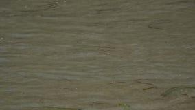 Plaża macha 4K zdjęcie wideo