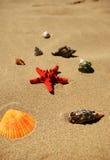 plaż naboje Zdjęcie Royalty Free