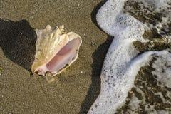 plaż naboje Fotografia Royalty Free