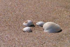 plaż naboje Zdjęcie Stock