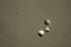 plaż naboje Obrazy Stock