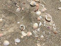 plaż naboje Obraz Stock
