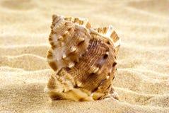 plażowa denna skorupa Fotografia Royalty Free