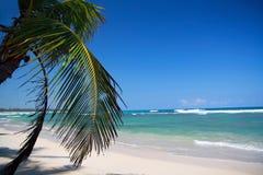 plażowa karaibska palma Obraz Stock