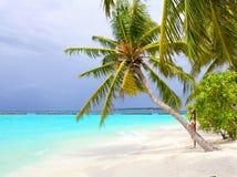 plażowa kokosowa palma Obrazy Stock