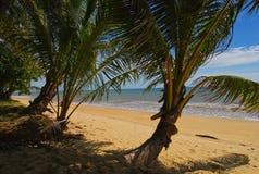 plażowa palma Zdjęcie Stock