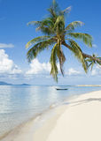plażowa palma Obrazy Stock