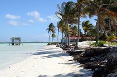 plażowa palma Obraz Royalty Free