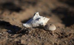 plażowa piaskowata skorupa Zdjęcie Stock