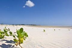plażowa pustynia Fotografia Stock