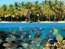 plażowa rafa zdjęcie royalty free