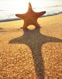 plażowa rozgwiazda Zdjęcia Royalty Free