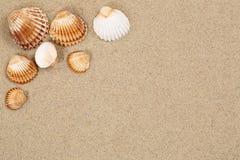 Plażowa scena w wakacje letni z piaskiem, morze skorupami i copyspac, obrazy stock