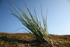 plażowa trawa Obraz Royalty Free