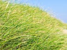 plażowa trawa Fotografia Stock