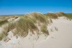 plażowa trawa Fotografia Royalty Free