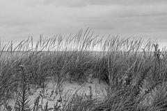 Plażowa trawa Zdjęcia Stock