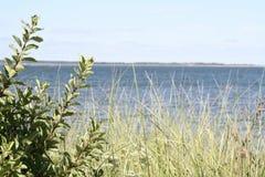 Plażowa trawa na Gardiners zatoce Fotografia Royalty Free