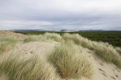plażowa trawa Oregon Fotografia Royalty Free